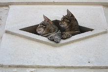 two cats looking out of oeil de boeuf window in the medoc - copie